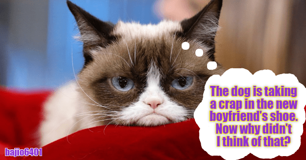 Why didn't I think of that? | Grumpy cat quotes, Cat memes ...