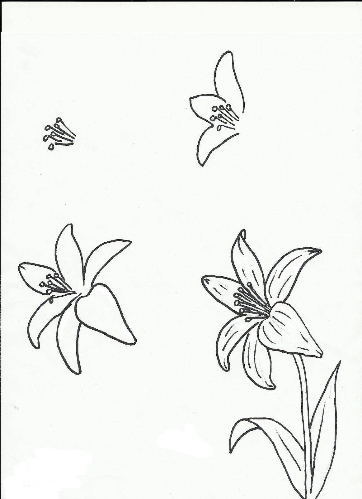 Art class ideas Drawing a Flower Drawings, Flower