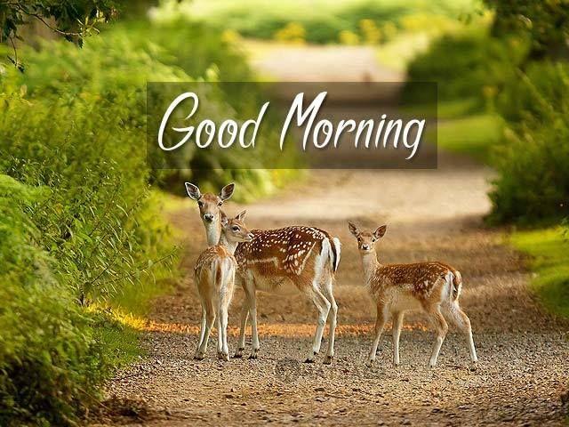 Image result for deer good morning gif