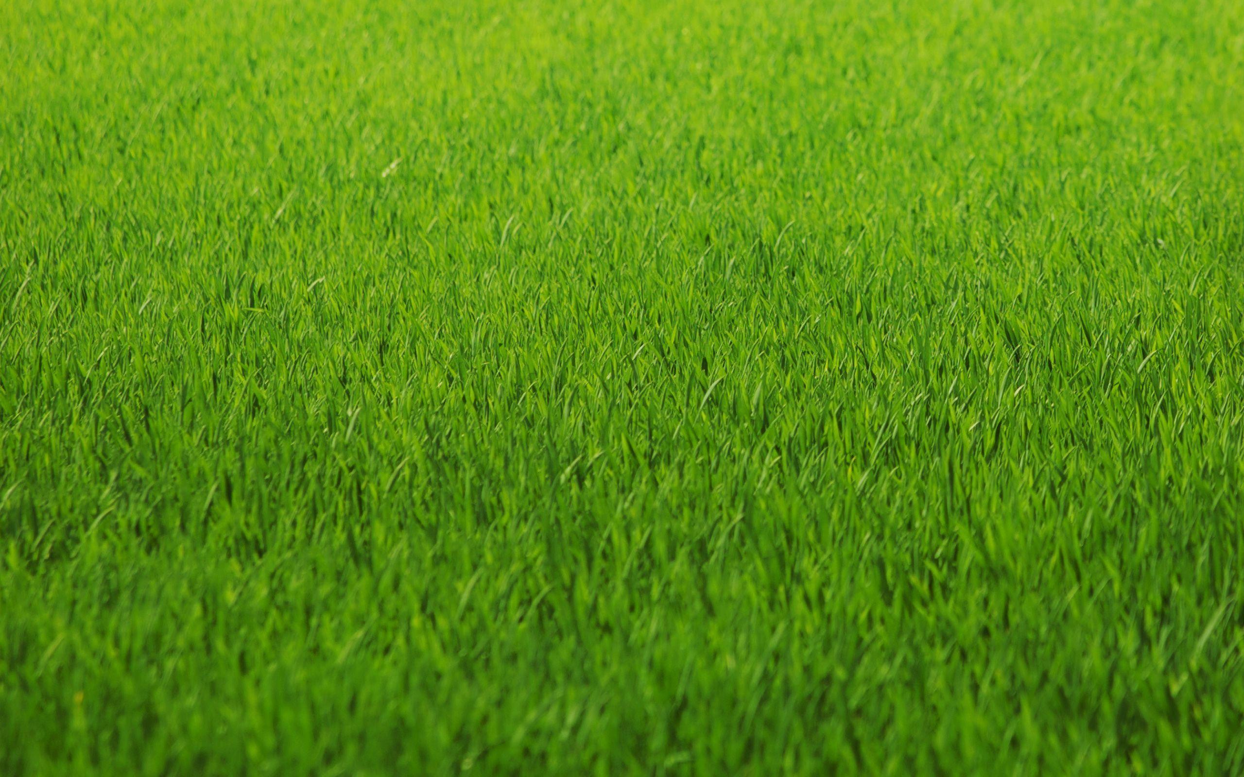 Flattened Grass HD desktop wallpaper High Definition