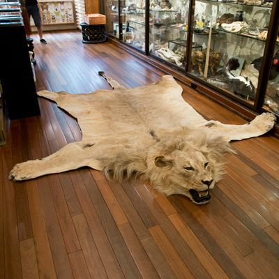 African Lion Rug Rugs Bedroom Themes Man Cave