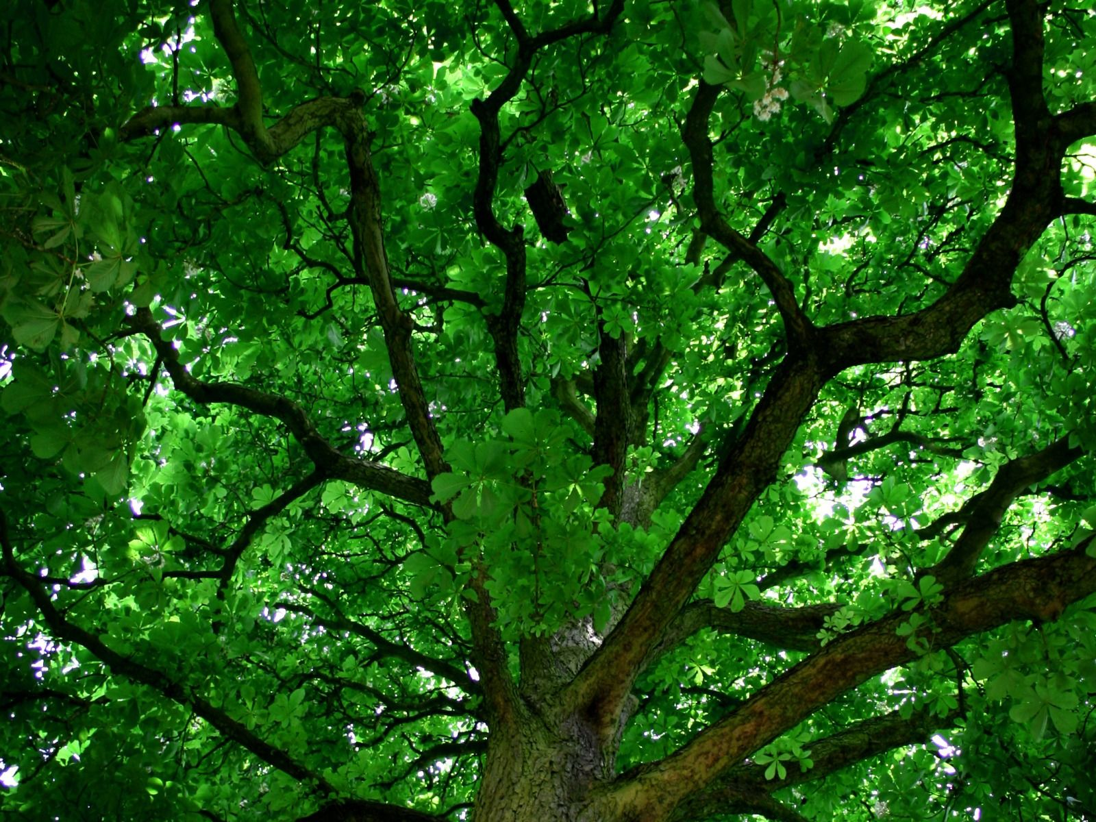 beautiful pictures of items in the color green Green