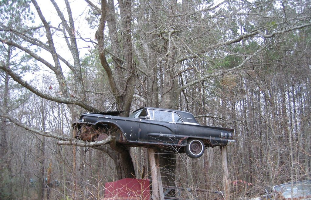 1958 Thunderbird growing in a tree oops should have cut them trees down a while ago