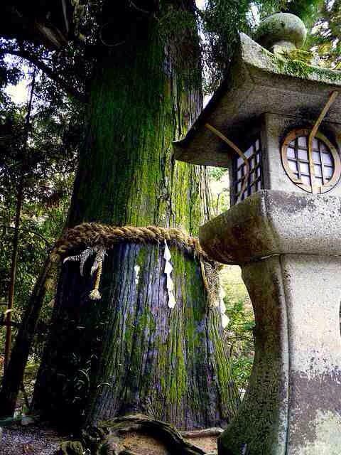 明日へ (ashitahe) or 明日に向かって (ashitanimukatte) Toward tomorrow