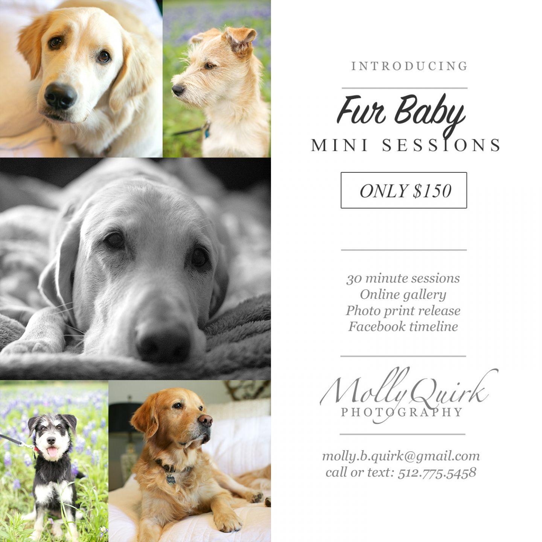 Furbaby Mini Sessions Pet Photographer Mini Sessions Dog