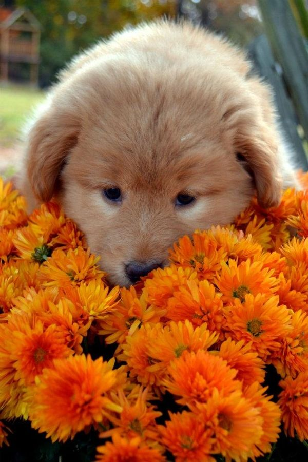 Puppy Flower Power Awww So Cute Puppy Flowers Animals