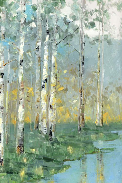 Birch Reflections III - Canvas Print