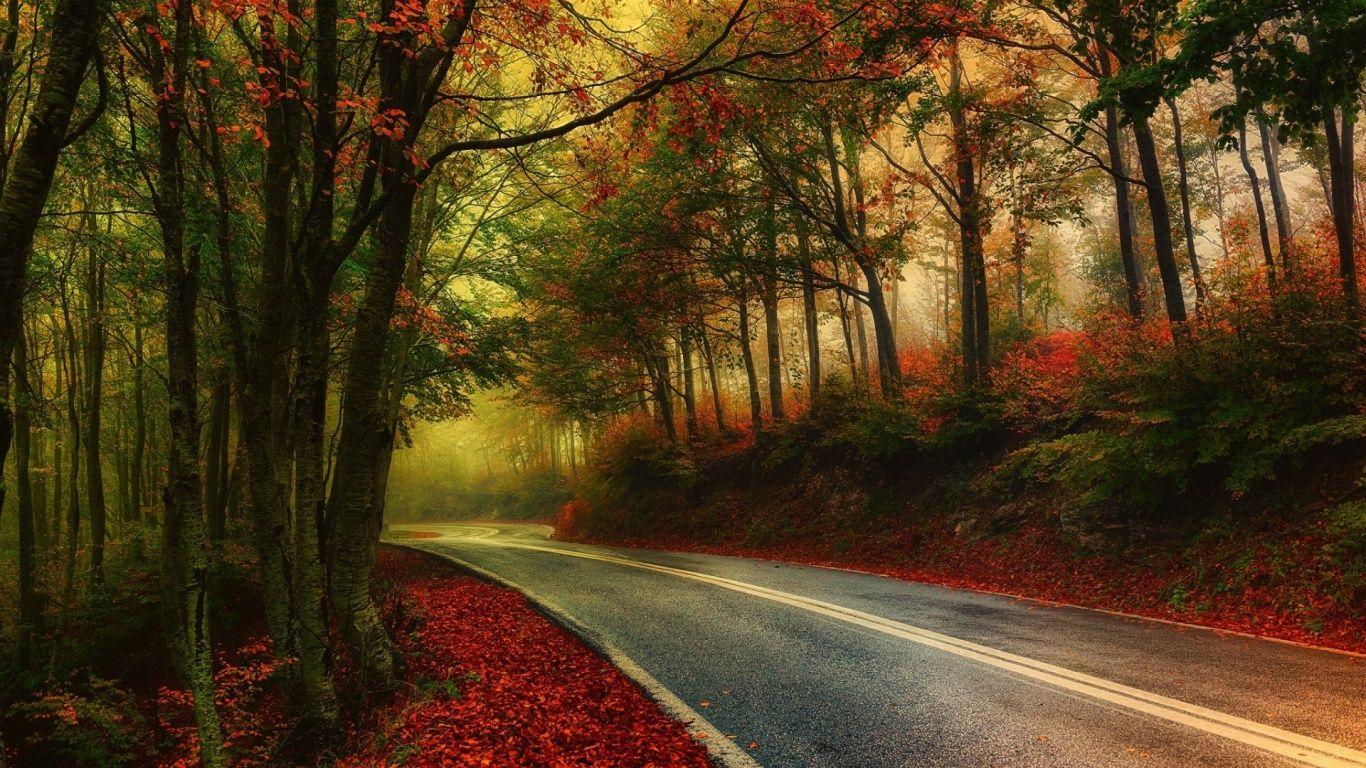 1366x768 Autumn Wood Road Leaves Foggy Landscape Autumn Scenery Scenery