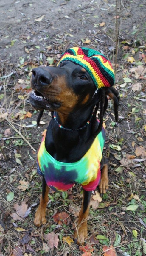 Everyting Is Irie Mon Check Out The Pictures From The Doberman