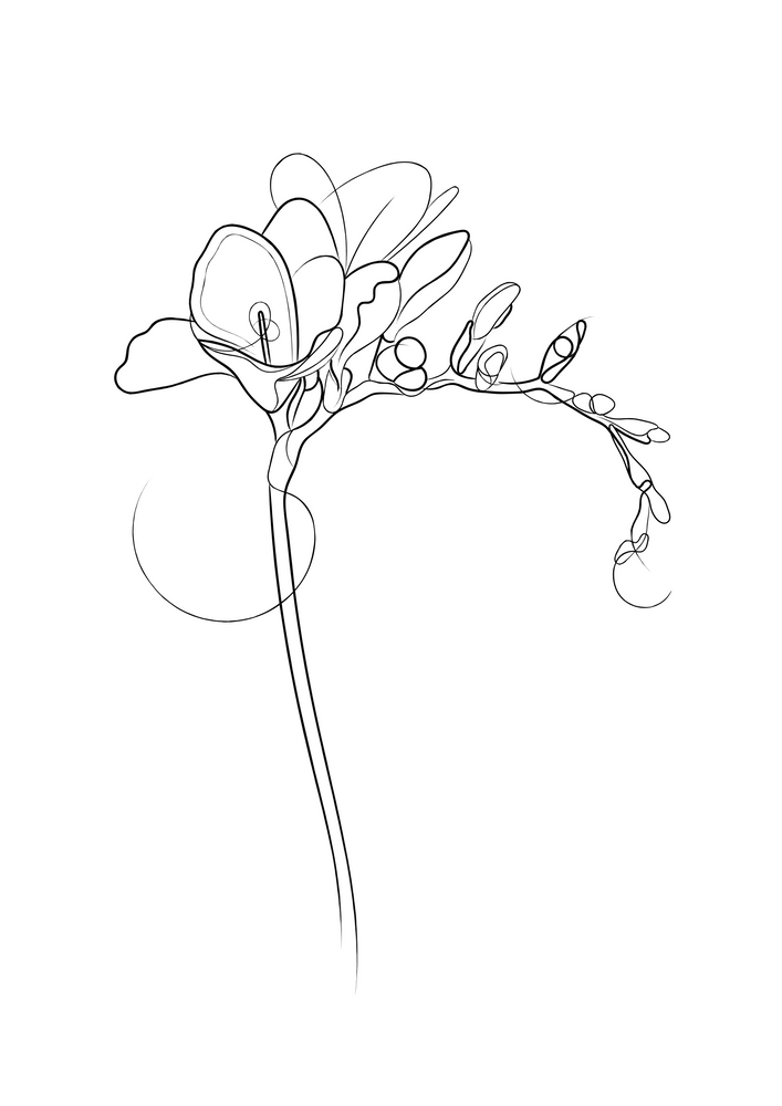 Freesia Flower Line Drawing Art Print By Adam Regester Illustration X Small In 2020 Flower Line Drawings Line Art Drawings Freesia Flowers