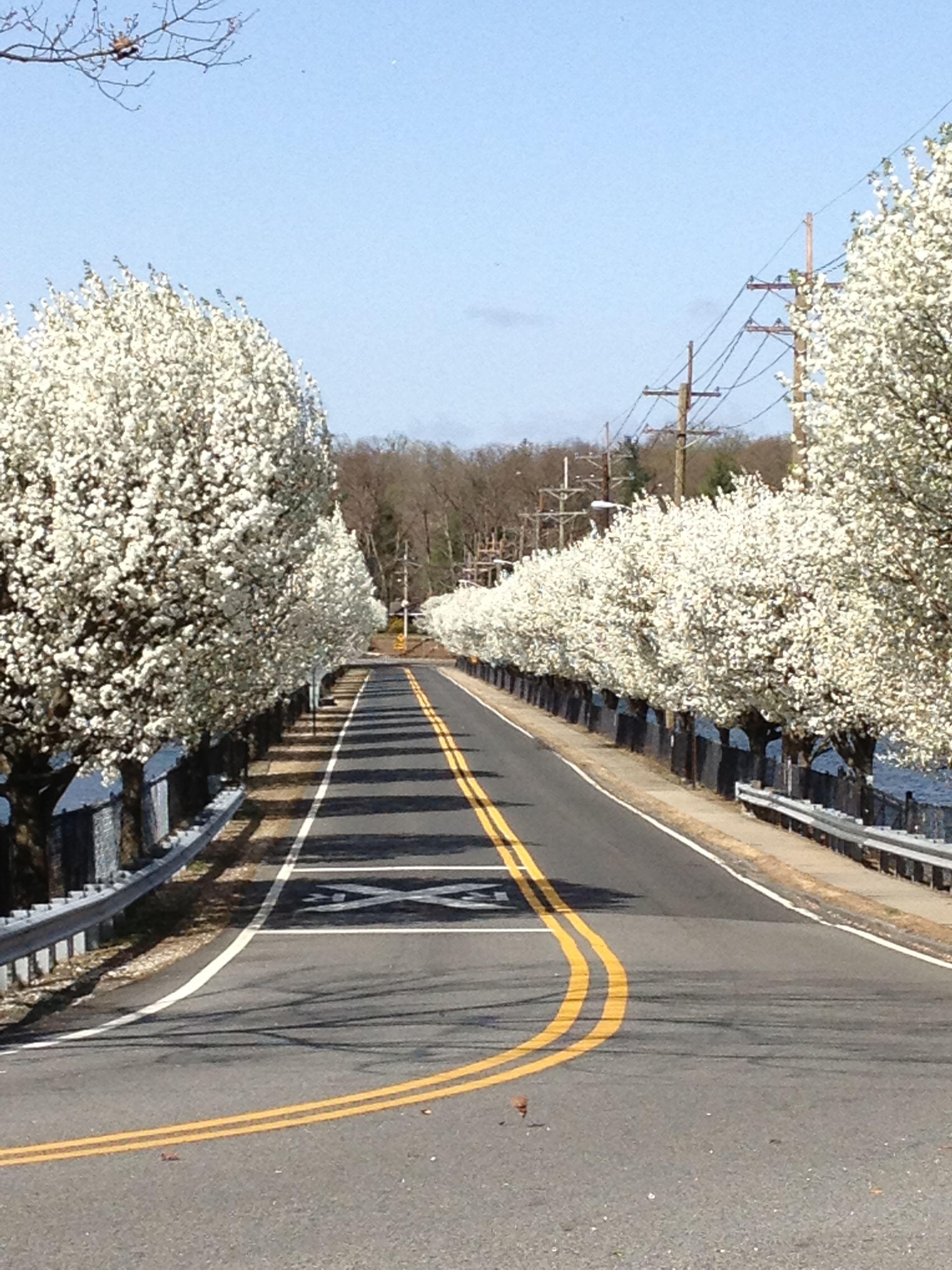 Reservoir Causeway, Woodcliff Lake, NJ | Memories of NJ