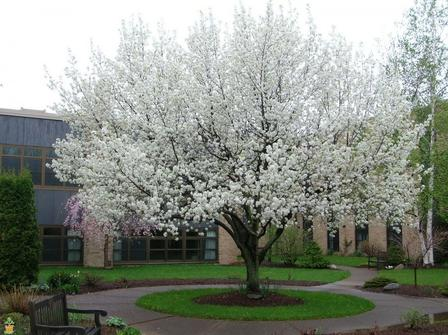 Flowering Trees Tagged Grows In Zones 9 Page 2 Plantingtree Com Fast Growing Shade Trees Shade Trees Trees To Plant