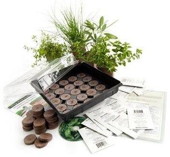 Culinary Herb Garden Starter Kit Contemporary Plants