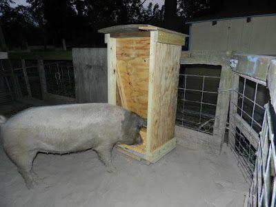 The Texas Pioneer Woman Pig Feeder Diy Pig Farming
