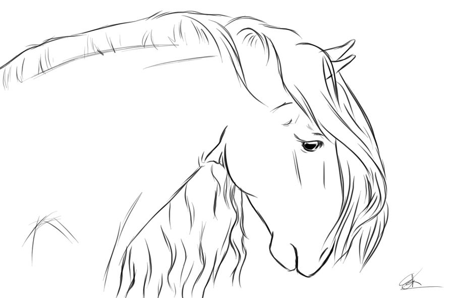 Andalusian Head Horse Coloring Pages Horse Drawings Watercolor Horse Painting