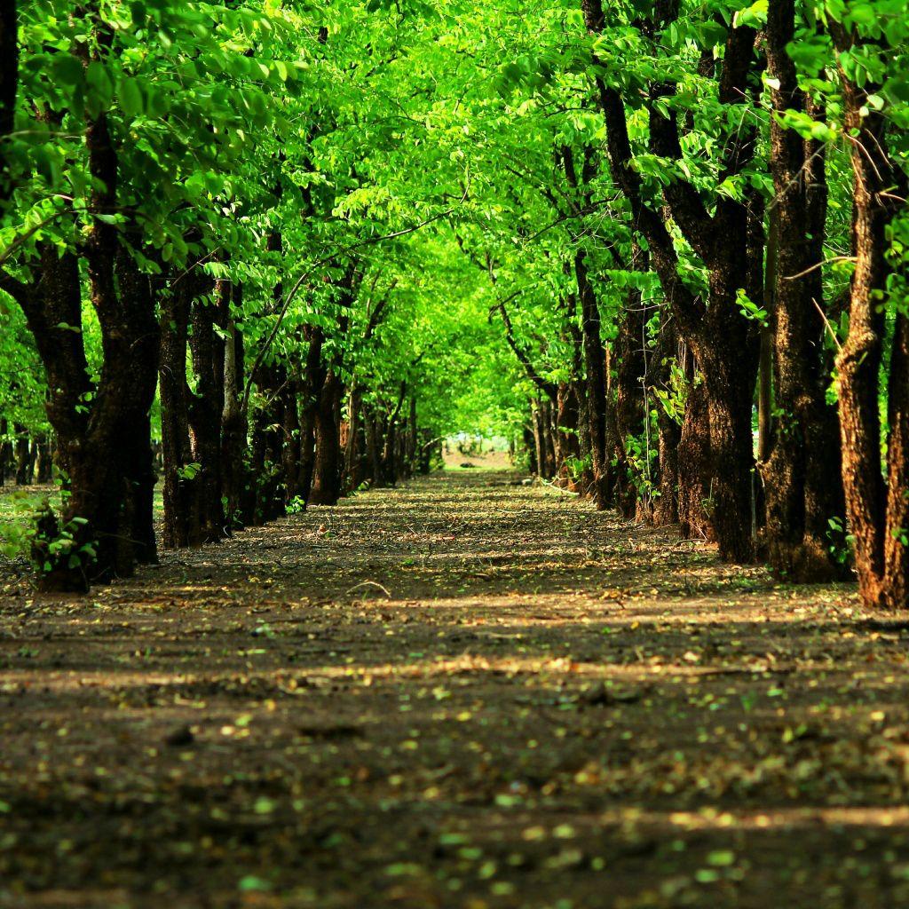 Natural Grove Green Trees Path IPad Wallpaper