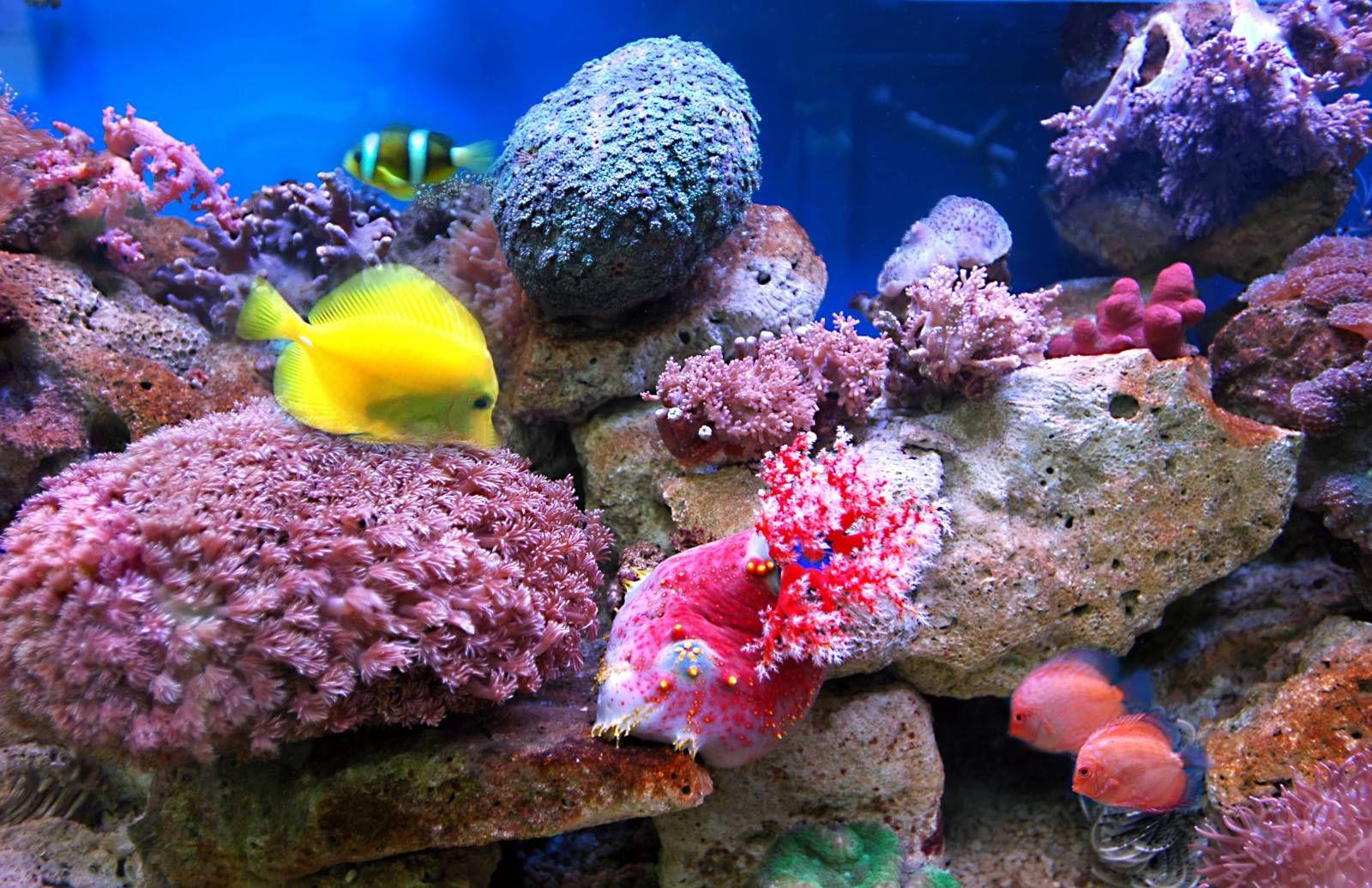 صور سمك 2017 ملون احلي الوان اسماك الزينة ميكساتك Beautiful Fish Sea Creatures Fish