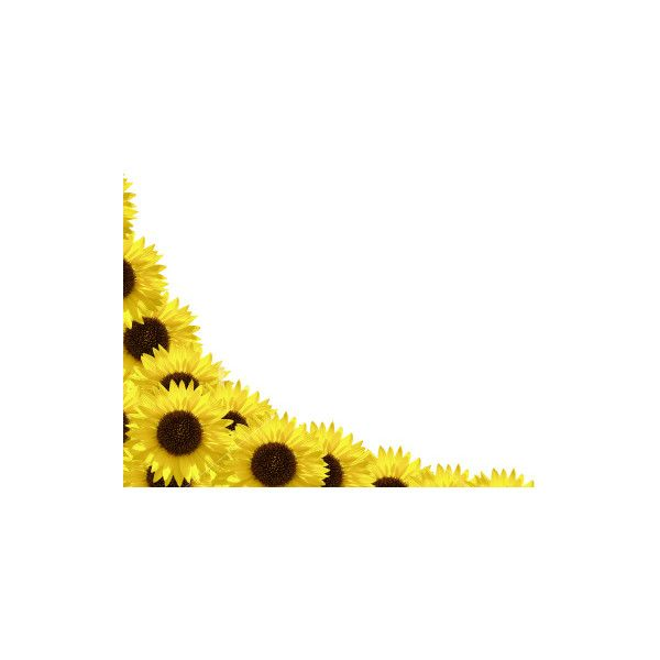 Royalty-free stock Image | Sunflower border/ frame ...