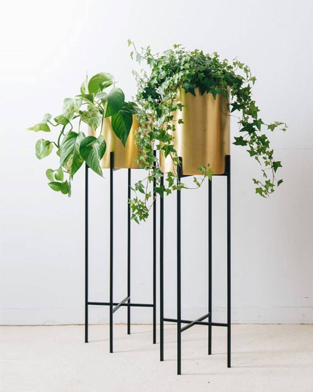 Bring Nature Into The Home With Our Deni Plant Stand And Brass Pot Countryroadstyle Plant Stand House Plants