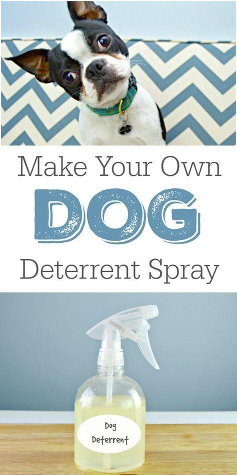 Diy Dog Deterrent Spray Helps Stop Indoor Accidents And Chewing