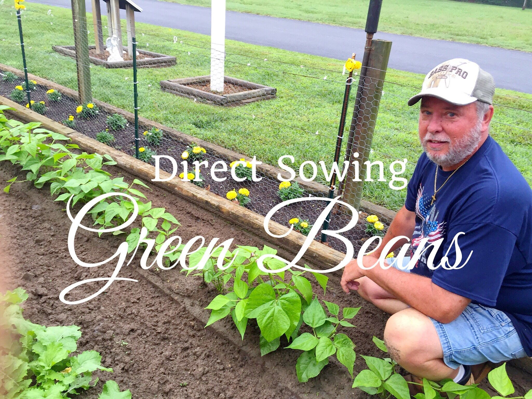 Hd How To Grow Green Beans Snap Beans By Direct Sowing Subscription Free Growing Green Beans Growing Beans Snap Beans