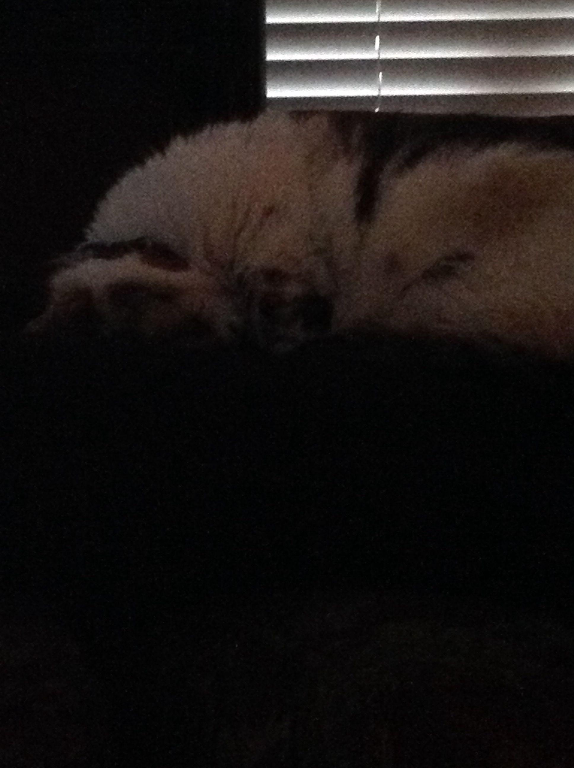 My Cat Sleeps On Her Neck Cat Sleeping Beautiful Cat Cats