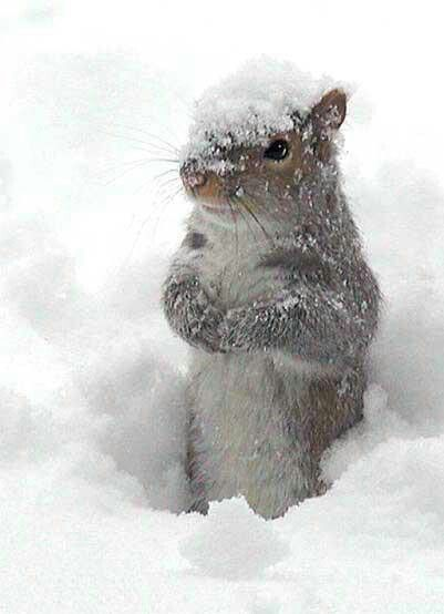 Please don't forget the birds and squirrels this winter a little food and shelter. #smallbirds