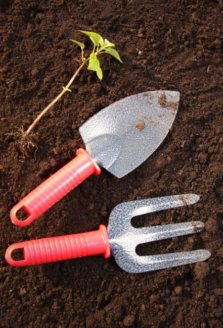 Whether you have a vegetable garden, rose garden or weed garden, here is the best round up of gardening tips and ideas that you've probably never tried! All of these little tricks are resourceful ideas for a beginner or even the novice green thumb.