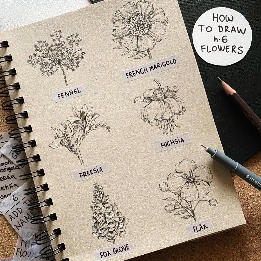 Alice On Instagram 6 Flowers A Page Of My Sketchbook And 6 Different Flowers Which Start With In 2020 Flower Drawing Flower Drawing Design Easy Flower Drawings
