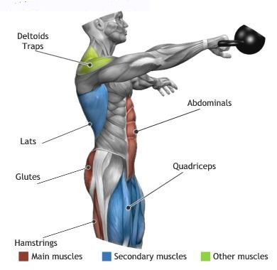 Kettlebell Swings effect the above muscle groups | Muscle Anatomy ...