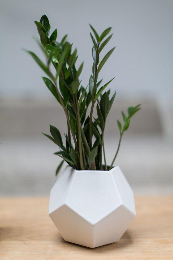 5 Pretty Houseplants That Thrive On Neglect Plant Decor