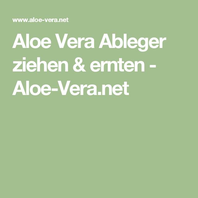 Aloe Vera Ableger ziehen & ernten - Aloe-Vera.net