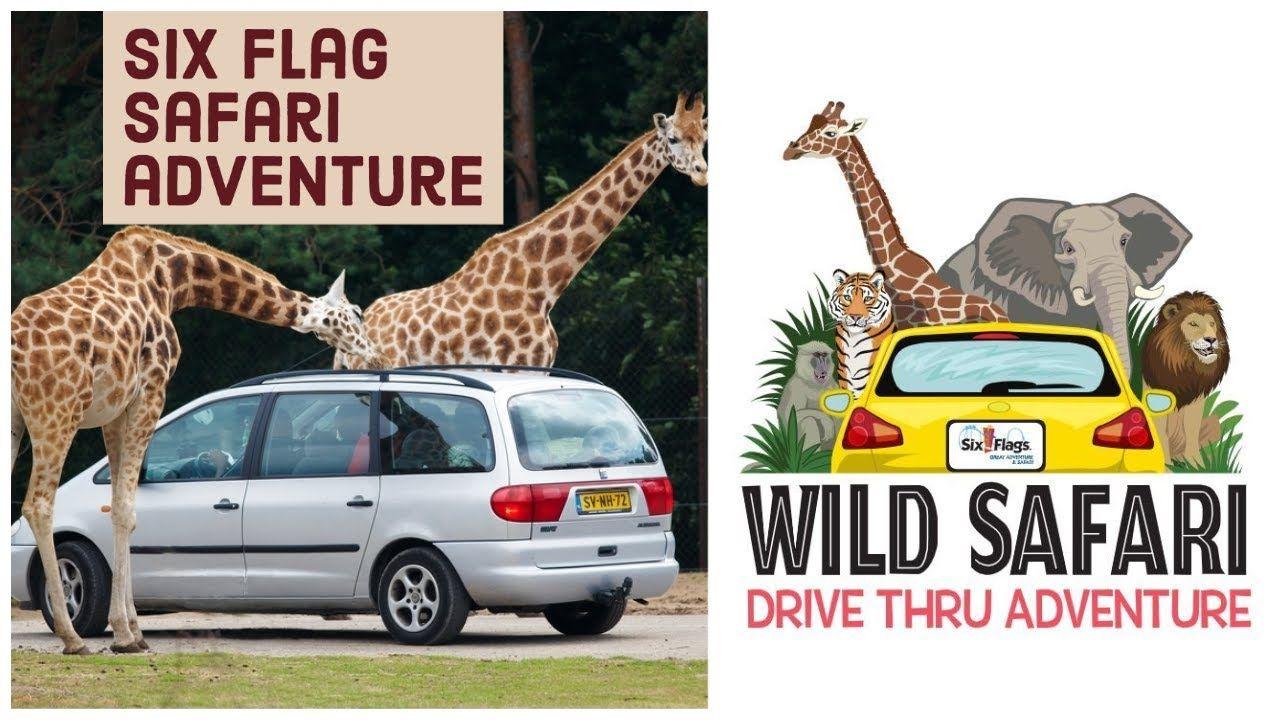 Six Flags Great Adventure Safari Drive Thru Tour Review 2020 I Ha Six Flags Great Adventure Safari Adventure Greatest Adventure