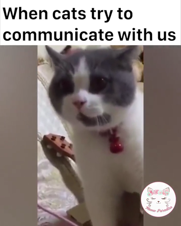 Cats Can Speak #funnykittens