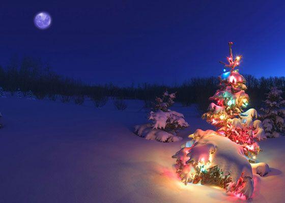 Quer receber um suplemento alimentar em sua casa?   Carregue uma fotografia sobre o tema do Natal. As 3 mais votadas com GOSTO dos nossos fãs, escolherão um dos suplementos da lista apresentada. Será enviado livre de qualquer encargo.  O passatempo está limitada às vinte primeiras fotografias. Devem carregar a fotografia natalícia para o vosso perfil do facebook e partilhar em comentário ao tópico.  Mais informações em: https://www.facebook.com/PronatProdutosDeSaude