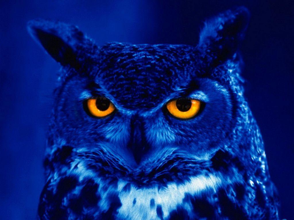 annoyed blue owl