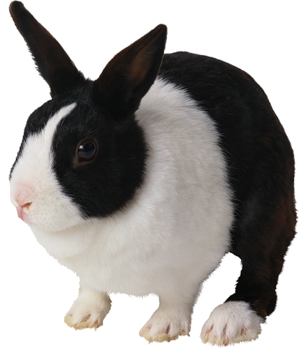 Tubes Png Lapins Black And White Rabbit Pet Rabbit Care Cute Bunny Pictures