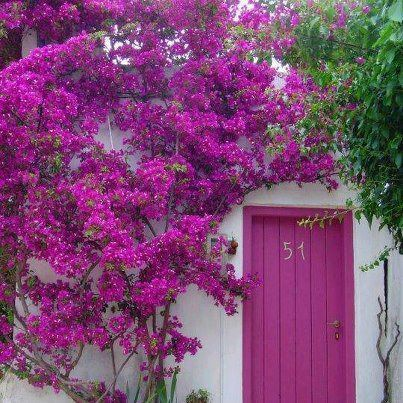 Pin By Terry Paster Comeau On Purple Pinterest Gardens