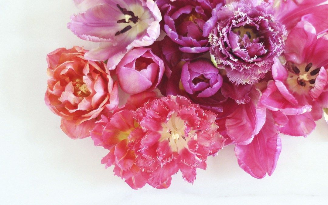 Images of Peony Desktop Wallpaper - #SC