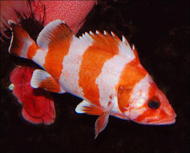 Pin On Nature Fishs
