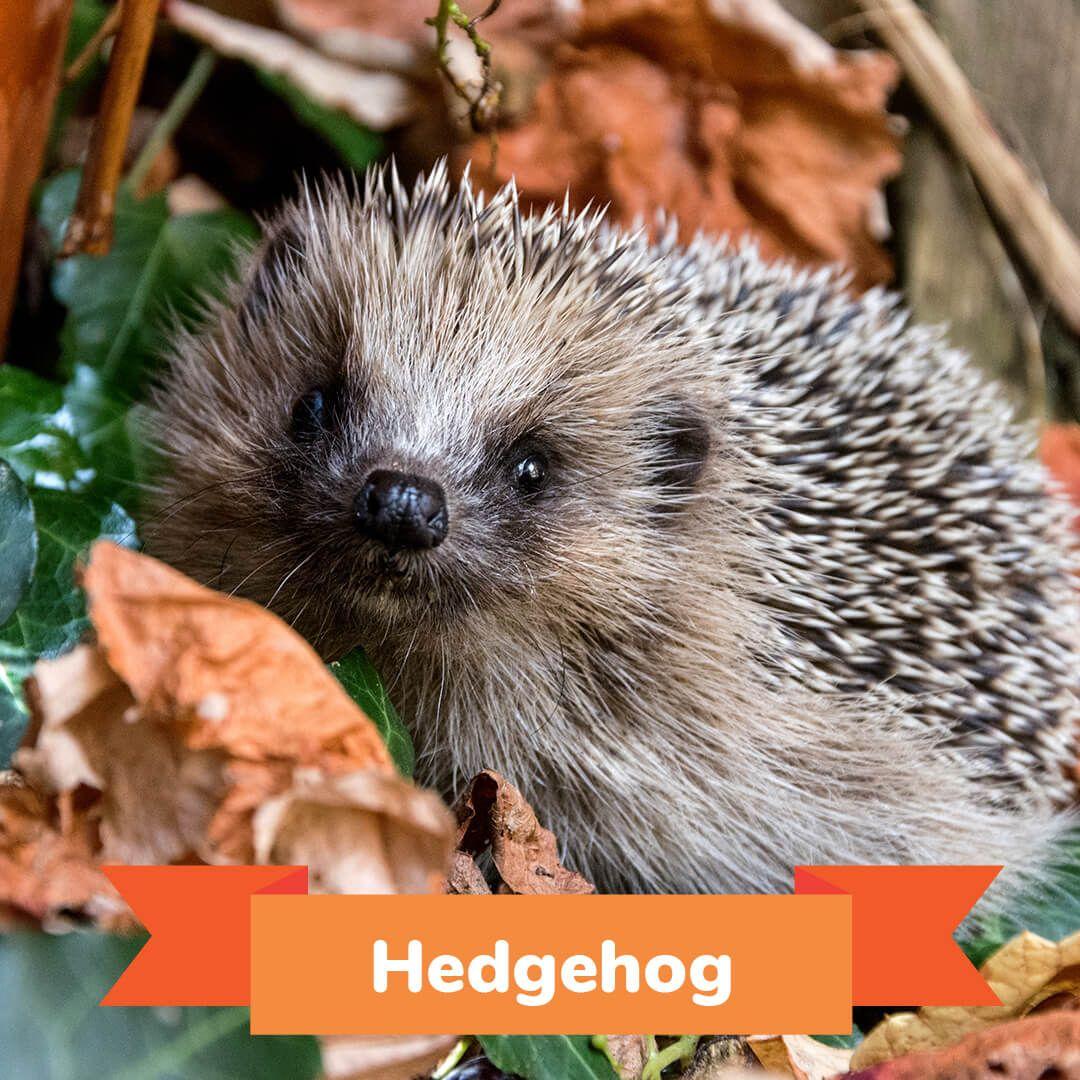 15 Animals that Hibernate During the Winter Animals that
