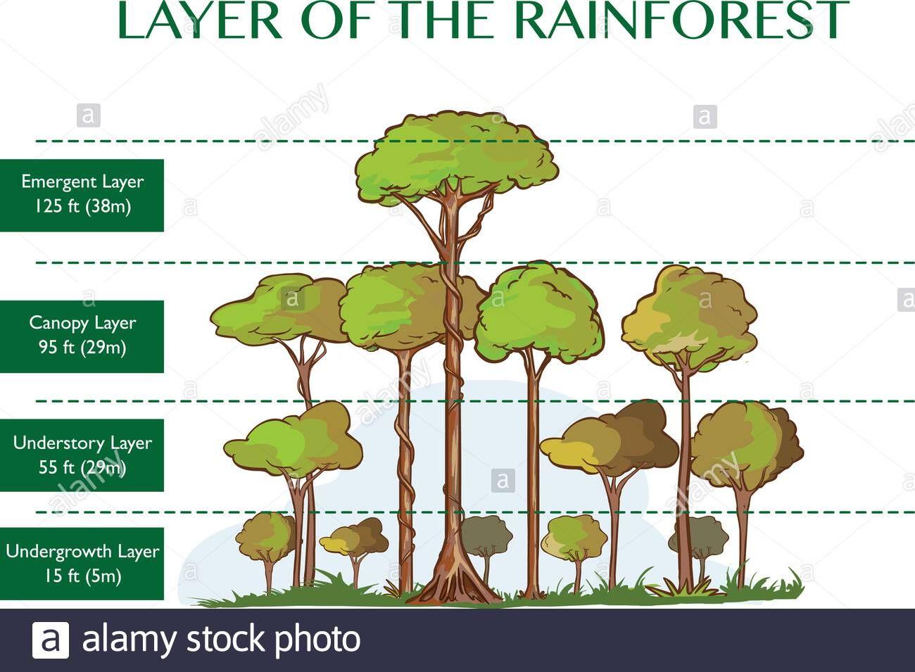Jungle Layers Isometric