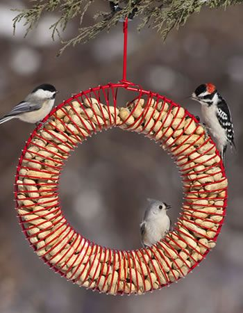 Red Whole Peanut Wreath For Marcie Wooden Bird Feeders Bird Feeders Bird House Feeder