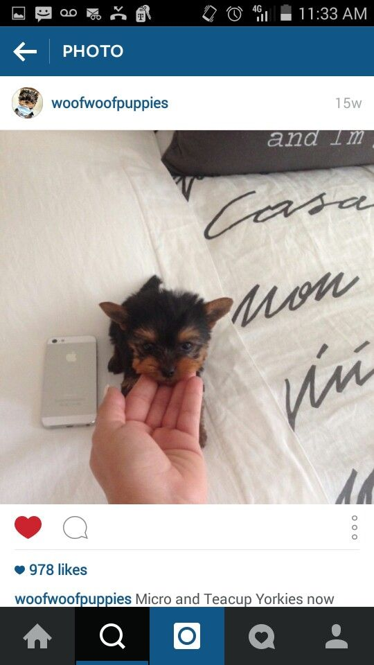 Pin by Christina on Puppy aka My Baby