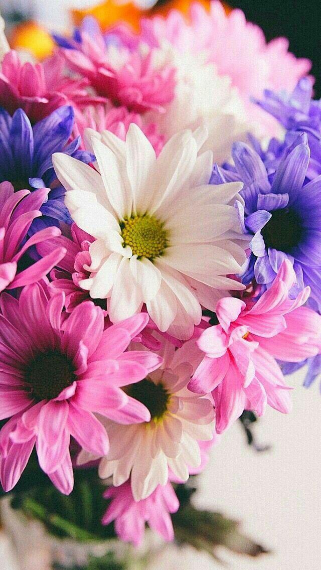 Wallpaper Purple flowers wallpaper, Flower wallpaper