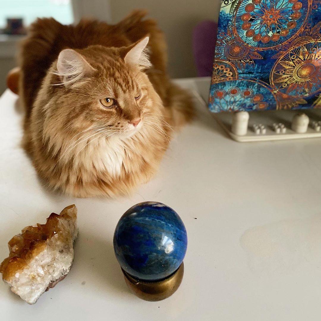 #CLICK #SAVE #FOLLOW #PIN #catofinstagram #cats #catoftheday #cat #catstagram #catlovers #caturday #ilovecats #mycat #lovecats