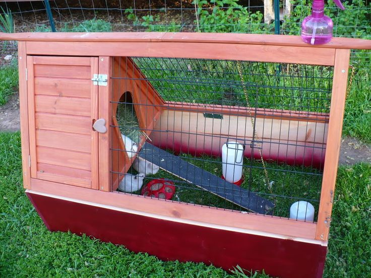 Starting Out With Quail   Survivalist Forum U2026 | Backyard Chickens |  Pinterest | Quails, Backyard Chickens And Gardens