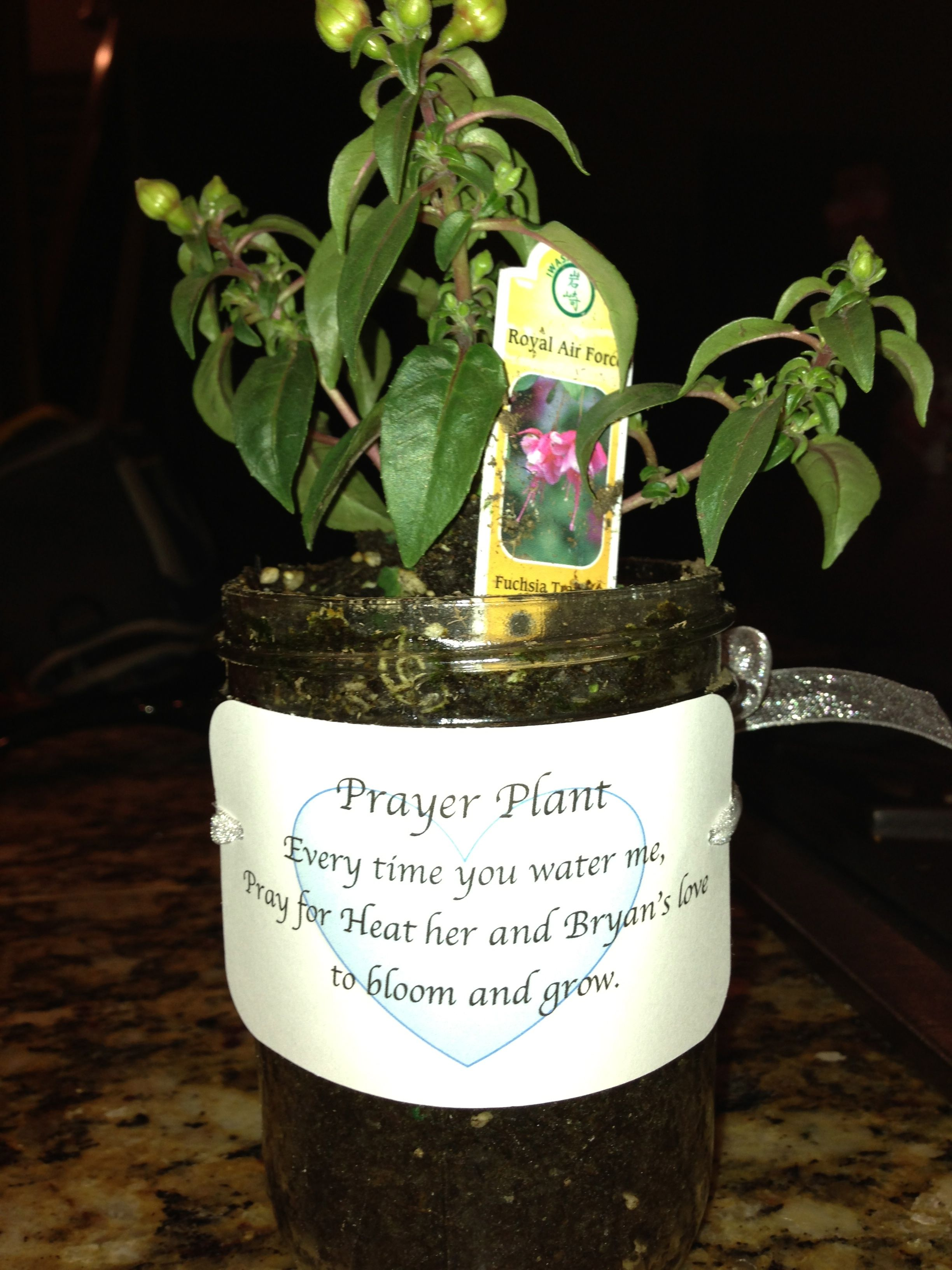for my bridal shower prayer plant every time you water me pray