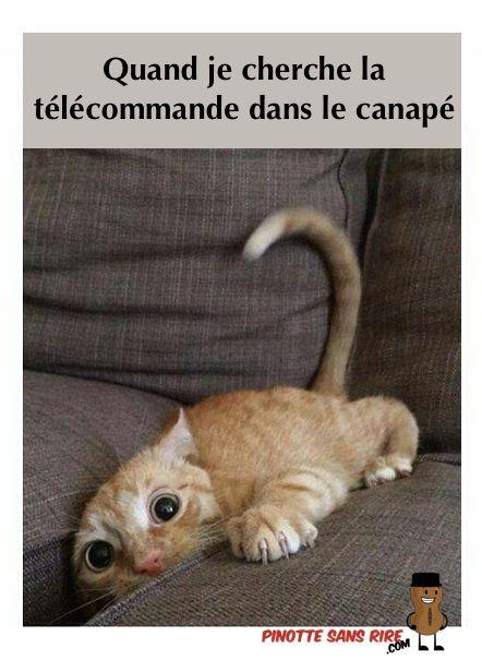 Souvent Quand je cherche la télécommande dans le canapé | Telecommande  JY36