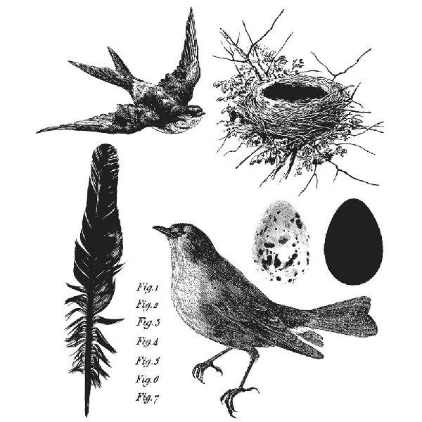 SA Tim Holtz-leimasinsetti Bird Feather
